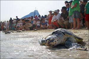 Jumeirah rehabilitates 100 turtles into the wild to mark World Sea Turtle Day