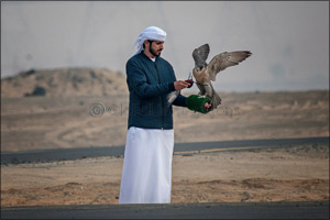MRM Falcon and F3 fastest as Fazza Championship for Falconry Tilwah kicks off with RC Airplane compe ...