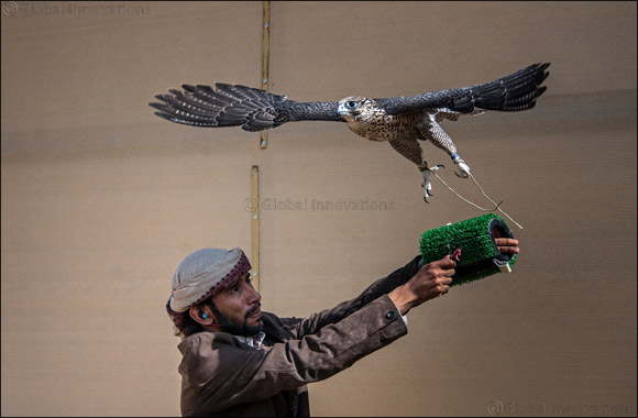 Record number of 670 compete on second day of Fazza Championship for Falconry Tilwah