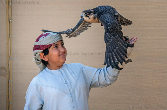 Junior falconers steal limelight in Fazza Championship for Falconry Tilwah