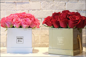 Celebrate the joy of gifting with Magna Flora