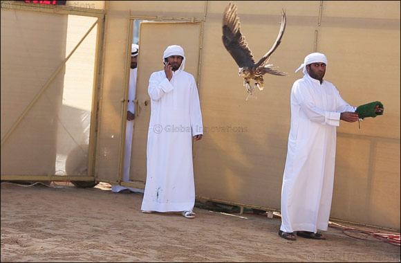 The Falcon 'Ghaith' makes winning start for Fazza (Sheikh Hamdan) in Falconry Tilwah Championship