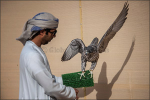 Sheikh Hamdan awards win to runner-up after �Ghaith' dazzles in Fazza Championship for Falconry Tilw ...