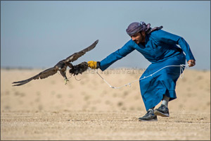 Flying start for F3 falconers in Fazza Championship for Falconry Tilwah �Fakhr Al Ajyal'