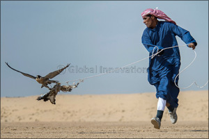 Qatar falconers dominate GCC event in Fazza Championship for Falconry Tilwah �Fakhr Al Ajyal'