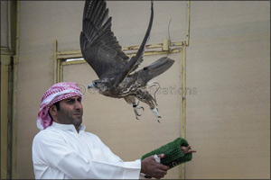 Majestic win for Sheikh Hamdan's falcon �Ghaith' in �Fakhr Al Ajyal' Championship for Falconry Tilwa ...