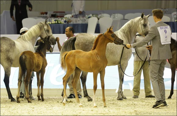 Family-friendly Fun Awaits Equestrian Enthusiasts at Dubai International Horse Fair