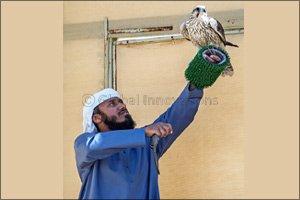 Records fall as Fazza Championship for Falconry � Telwah opens for  General Public