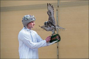 Dubai-based Briton makes waves on debut in Fazza Championship for Falconry � Telwah