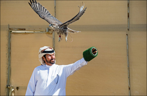 Elite falconers to vie for top honours in Fakhr Al Ajyal Championship for Falconry - Telwah