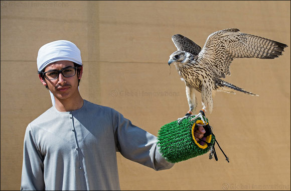 Briton's falconry ambitions soar as falcon 'English' takes flight