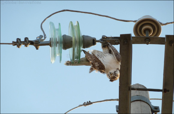 His Highness Establishes New Foundation with $1m Seed Funding to Combat Electrocution of Falcons