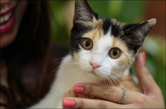 Give an abandoned or neglected cat their forever home at Kittysnip's adoption days in Dubai