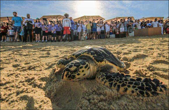 Dubai Tourism Extends Its Support to Local Turtle Rehabilitation Project