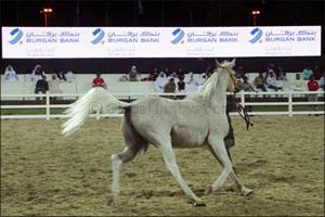 Burgan Bank is the Diamond Sponsor of  �Kuwait National Arabian Horse Festival 2018�