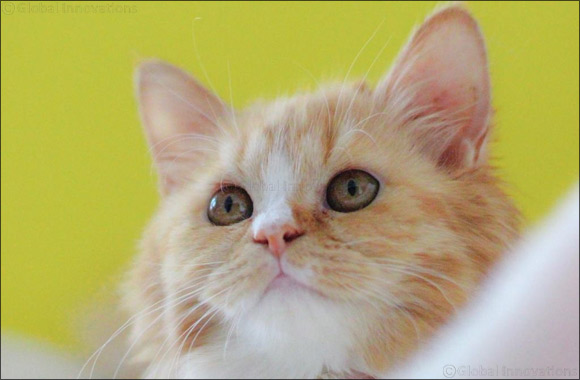 Every MEOWment counts, meet your PURRever friend at Kittysnip cat & kitten adoption day