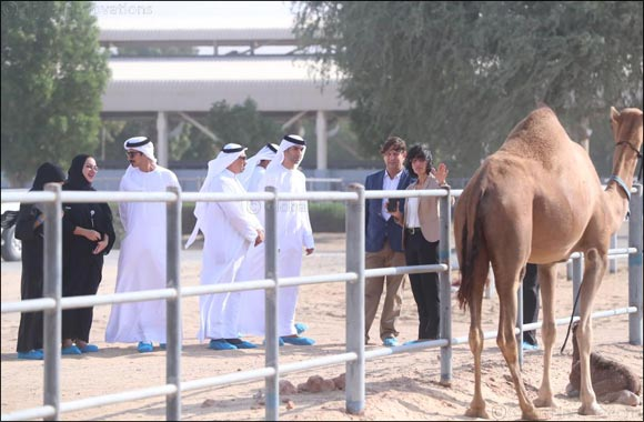 Solar Power Plant at Emirates Industry for Camel Milk to Start Operations in Early 2020