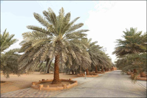 Palm Tree Added to UNESCO's Representative List of Intangible Cultural Heritage as Shared Arab Herit ...