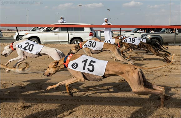 Nasser Bin Dalmook's 'Najm' Dominates Saluki Championship 2020