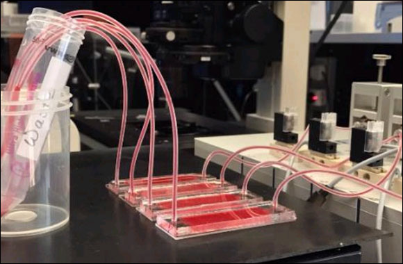 NYUAD Researchers Develop New Tool for Performing Cancer Liquid Biopsy and Studying Mechanical Properties of Circulating Tumor Cells