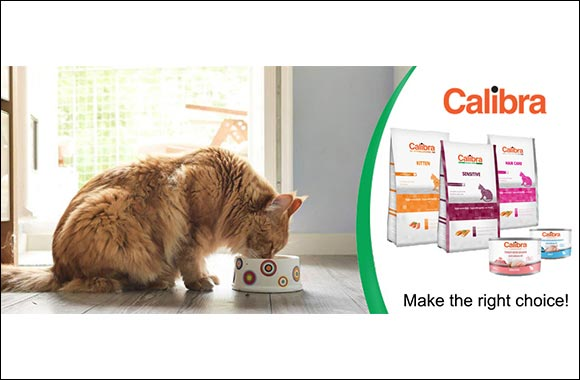 Tips on How to Choose the Right Cat Food