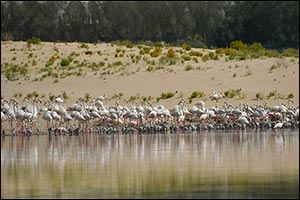 Al Wathba Wetland Reserve to Temporarily Close to Protect Bird Nests