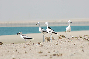EAD and Wetlands International Launch a New Online Portal for the World's Waterbird Populations