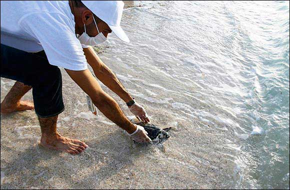 EAD and Nawah Released Rescued Turtles Back into Their Natural Habitats