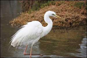Dubai Municipality to Celebrate World Migratory Birds Day 2021