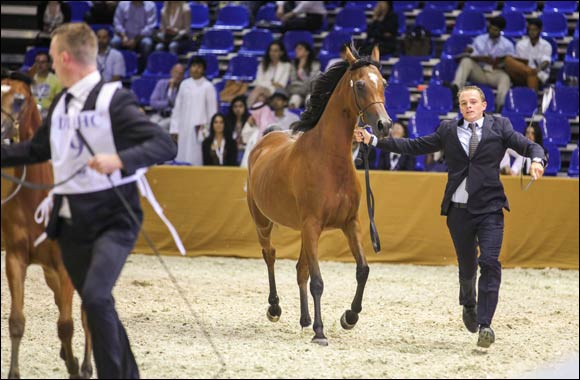11th Dubai International Horse Fair makes tracks with widening global and local reach