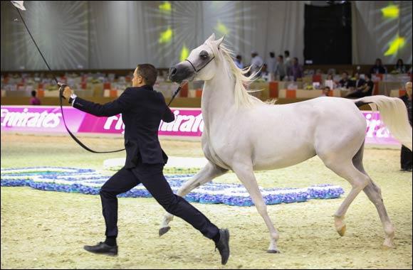 Dubai International Horse Fair and Dubai International Arabian Horse Championship open tomorrow
